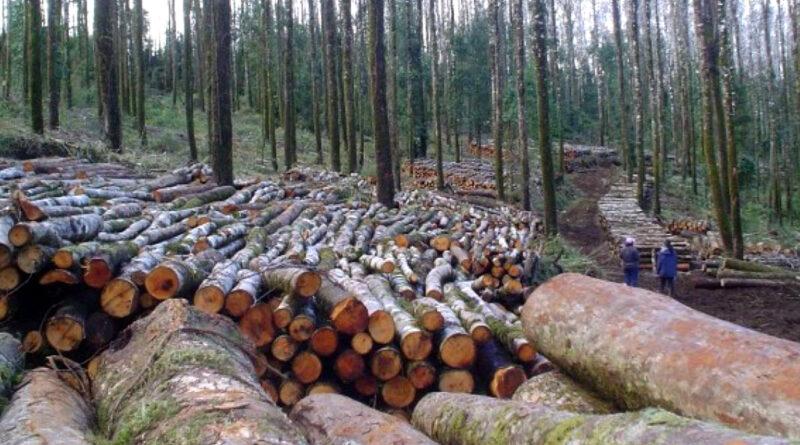 Pena de cárcel y multas más altas proponen para combatir tala ilegal de bosque nativo