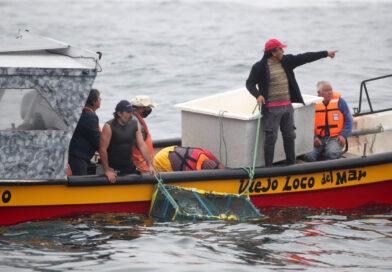 A sala pasará proyecto que modifica legislación pesquera para enfrentar efectos de la pandemia